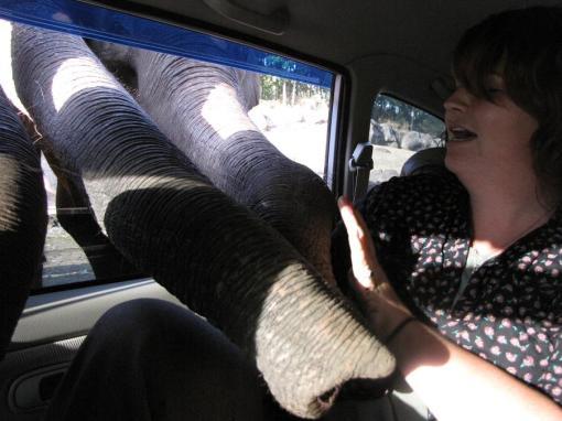 Touchy-feely elephants